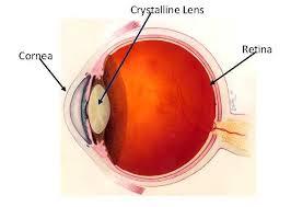 crystalline lens | eyepedia